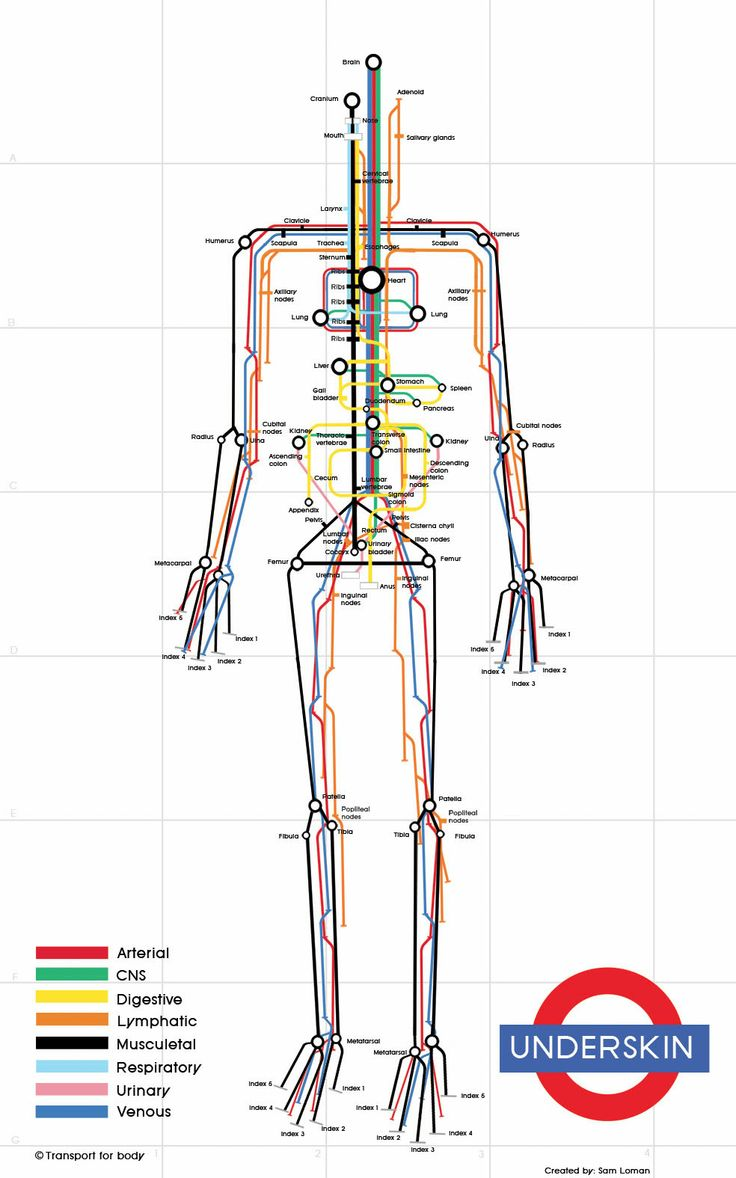 Subway_Infographic_Human_Body